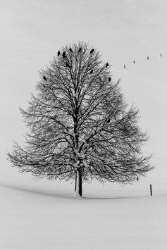 Winterbaum mit Raben 4