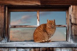Katze rot 5