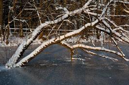 Baum im Wasser 2