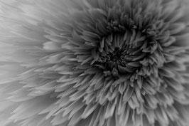 Blume 2 s/w