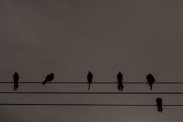 Vögel auf Draht