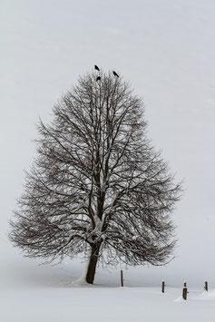 Winterbaum mit Raben 3