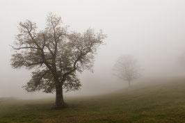 Herbstbaum 3