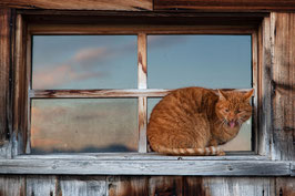 Katze rot 1