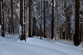 Schneebäume 6