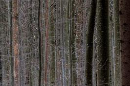 Im Bayerischen Wald 2