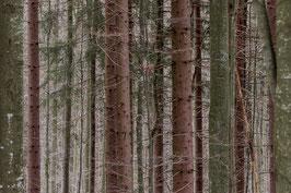 Im Bayerischen Wald 4