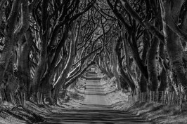 Baumallee Dark Hedges
