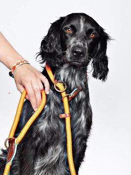 RETRIEVER LEINE SCHWARZ + TÜRKIS + ORANGE