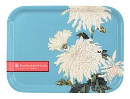 Chrysanthemum - Tablett