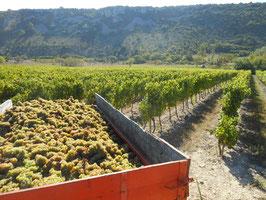 Location gîte coeur de semaine, du lundi au vendredi, en Ardèche.