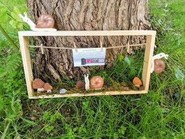 Cadre photo: la course des escargots