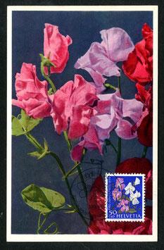 1.12.1959 PJ182 Gartenwicke Maximumkarte FDC