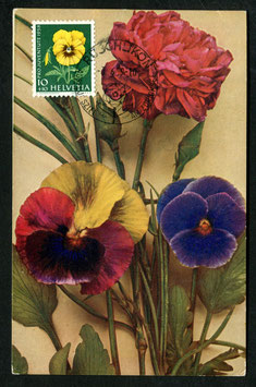 3.6.1959  PJ 174 Gartenstiefmütterchen  Maximumkarte mit K-Stempel Rüschlikon