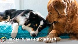 """Themenabend """"Ursache und Wirkung"""""""