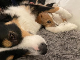 Workshop Hundeführung