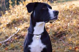 Hundemarkenkette KORDEL