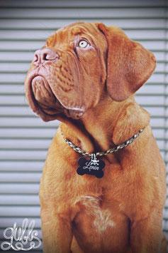 Hundemarkenkette TAU