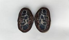 Septaria du Maroc