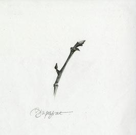 Bourgeon 1