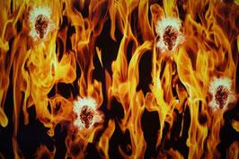 Vlammen en schedels
