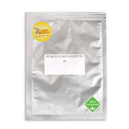 PC Penicillium Candidum - für Weißschimmelkäse
