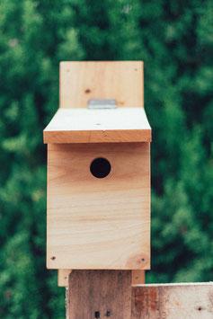 Caja nido -Próximamente