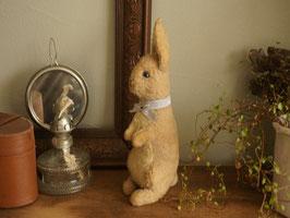 遠くを見るウサギ