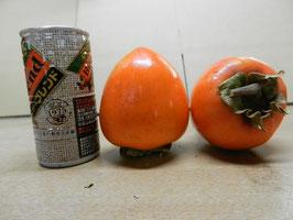 NO2 大きい蜂屋柿