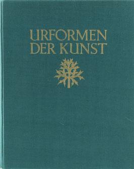 Blossfeldt, Karl - Urformen der Kunst - Photographische Pflanzenbilder