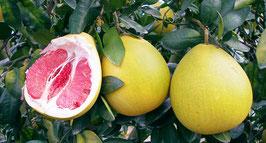 SHARE | Pomelozzini® - Vitamin C Bombe für deinen Körper - 20 Stück - Standardpreis: CHF 79.00 - nur für kurze Zeit CHF 69.00