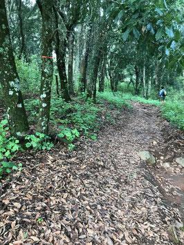 Caminata Cerro Viejo
