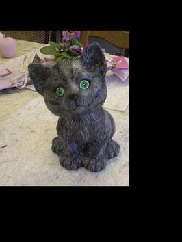 Katze  Willi sitzend