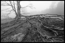 """Original Fotografie Klaus Ditté """"Wildnis 1"""""""