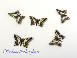25 butterflies size L (35mm)