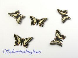 25 Schmetterlinge Größe L (35mm)