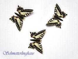 25 Schmetterlinge Größe XL (46mm)