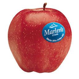 Manzana Starking Marlene