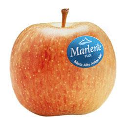 Manzana Fuji 20 Marlene