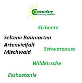 Paket - 4 Seltene Baumarten - Edelhölzer