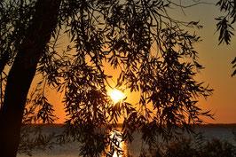 Sonnenuntergänge Lizenz