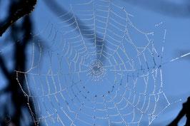 Wassertropfen im Netz