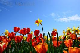 Blumen Lizenz