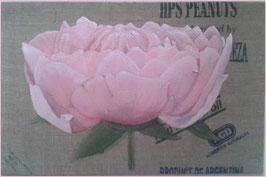 Schilderij 120 x 80 cm .ROZE PIOENROOS