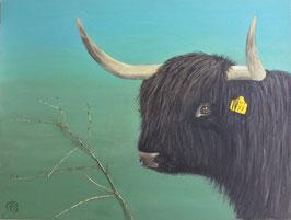 SCHOTSE HOOGLANDER schilderij