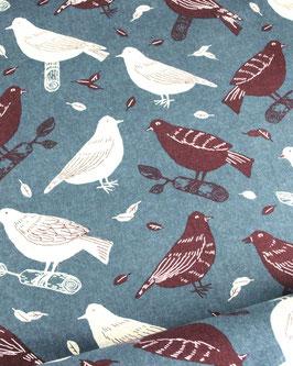 birds, Cosmo