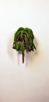 Baum Nr. 509
