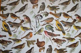 Vogel Motiv 2