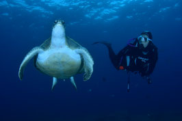 Bautizo de Buceo en zona de Avistamiento de Tortugas y Rayas + Paseo en barco por zona protegida Natural + Fotografias Gratis