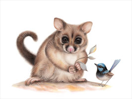 Brushtail Possum & Blue Wren Print